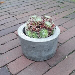 Plantenpot 12